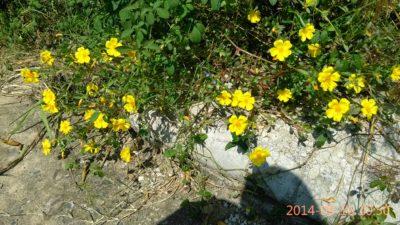 IMG_20140916_105040